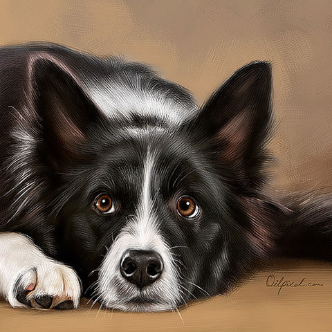 Dog Digital Portrait Painting by Oilpixel